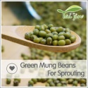green mung beans for sprouting  - product's photo