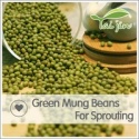 3.6mm green mung bean seed,green mung beans specification - product's photo