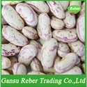 lskb /light speckled kidney beans /pinto beans/sugar beans - product's photo
