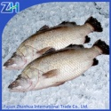 frozen seabass fish - product's photo