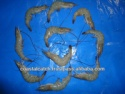 indian vannamei shrimps farm  - product's photo