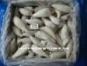 frozen squid tube - product's photo