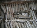 frozen indian oil sardine - product's photo