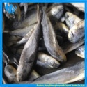 frozen mahi mahi - product's photo