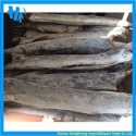 super frozen sailfish factory - product's photo