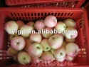 fresh royal gala apple - product's photo