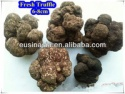 fresh white tuber indicum truffle - product's photo