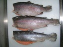 rainbow trout - product's photo