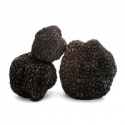 truffles mushroom/fresh black truffle - product's photo