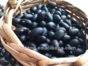 black kidney bean (2012 crop, hand-picked selection. heilongjiang origin) - product's photo