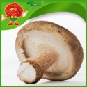 chinese fresh mushroom - product's photo
