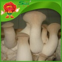 iqf coprinus fresh mushrooms wholesale - product's photo