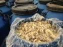 slice, whole, drum, slalted champignons, mushroom - product's photo