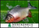 whole round red pomfret - product's photo