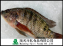 tilapia fish 500-800g - product's photo