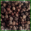 new crop 100% wild mushroom black truffle - product's photo