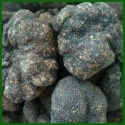chinese fresh black truffles - product's photo
