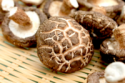 quality dried mushroom - product's photo