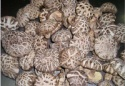 shiitake lentinus mushroom of white and tea color - product's photo