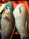 parrot fish - product's photo