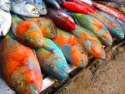 whole parrot fishes - product's photo