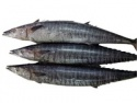 whole seer fishes - product's photo