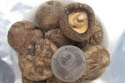 dried shiitake mushrooms cheap price - product's photo