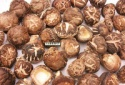 dried thin mushroom - product's photo