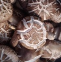 hot sale high quality button mushroom cultivation - product's photo