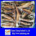 frozen illex giant squid - product's photo
