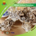 dried grifola frondosa - product's photo