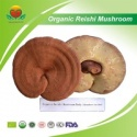 eu organic reishi mushoom - product's photo