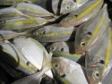 yellow tail scad fish - product's photo