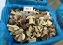 frozen boletus edulis - product's photo