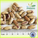 lskb light speckled kidney beans - product's photo