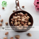 cranberry beans light speckled kidney beans oval shape - product's photo