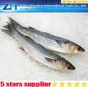 frozen fresh grey mullet fish - product's photo