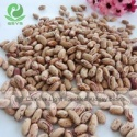 light speckled kidney beans long shape - product's photo