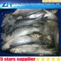 frozen grey mullet fish - product's photo