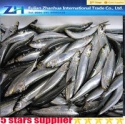 frozen sardine fish - product's photo