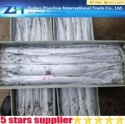 frozen fresh ribbonfish - product's photo