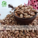 light speckled kidney beans sample free - product's photo