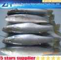 freeze grey mullet fish - product's photo