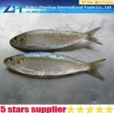 sardine fish - product's photo