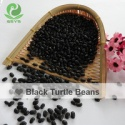 spanish black bean frijole negro - product's photo
