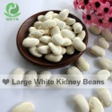 large white kidney beans fagioli - product's photo
