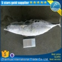 frozen bonito tuna - product's photo