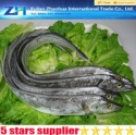 frozen ribbon fish - product's photo
