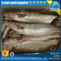 quality mullet fish roe - product's photo