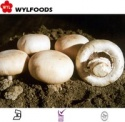 china mushrooms frozen button mushroom with good quality - product's photo